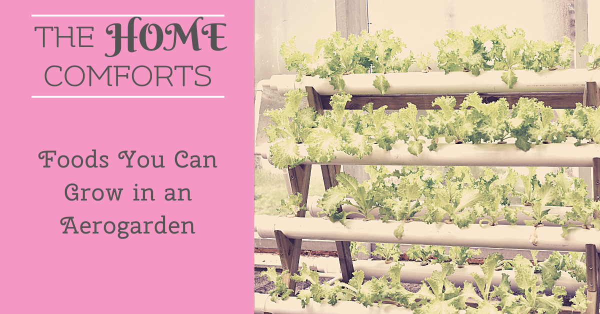 Foods You Can Grow in an Aerogarden