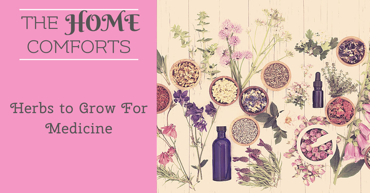 Herbs to Grow For Medicine